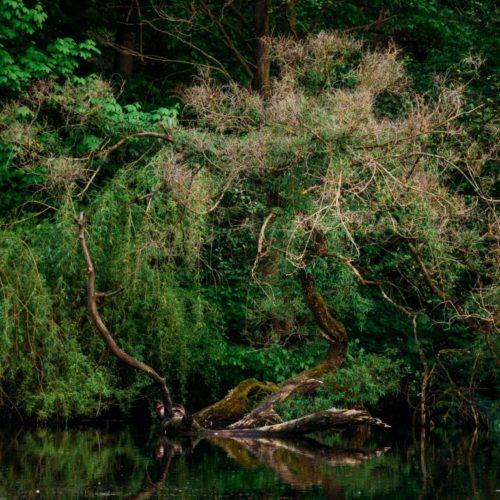 Baumholz im Clarabadteich