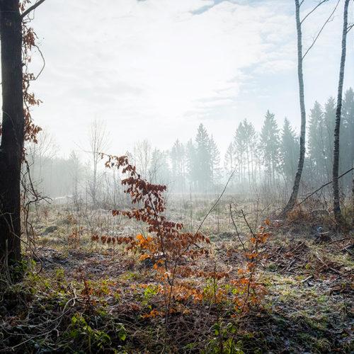 Nebliger morgen im Lappwald