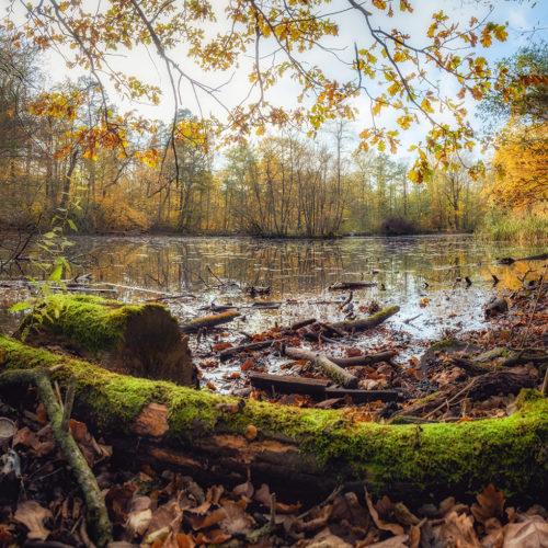 Lappwald – Schafteich